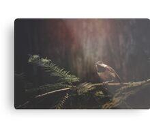 Chickadee in the Redwoods Metal Print
