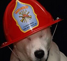 Firefighter Dog by AngiesImages