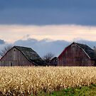 Family of Barns by Brian Gaynor