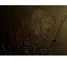 Backlit Web Photographic Print