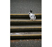 U Vic Rabbit Photographic Print