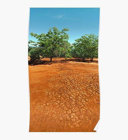 Red soil Poster