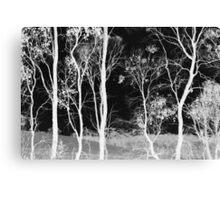 Bush Spirits Canvas Print