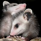 'POSSUM KIDS by Kay Kempton Raade