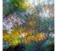 Ode to Monet Photographic Print