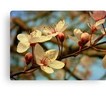 It's Spring Canvas Print