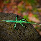 Praying mantis by tienpa