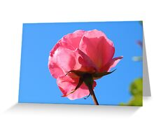 Pink Rose And The Blue Sky Greeting Card