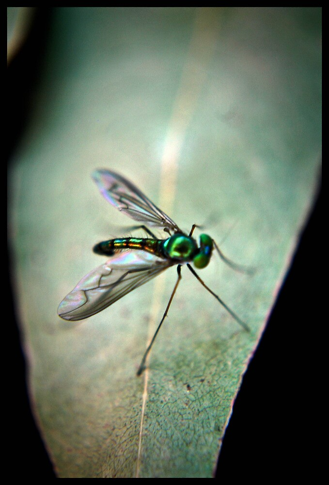vibrant green fly on a leaf by tienpa