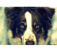 Josey in the snow Photographic Print
