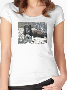 Mountain hound - doggone happy! Women's Fitted Scoop T-Shirt