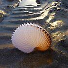 Paper Nautilus-02 by Albert Sulzer