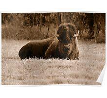 American Bison (Sepia) Poster