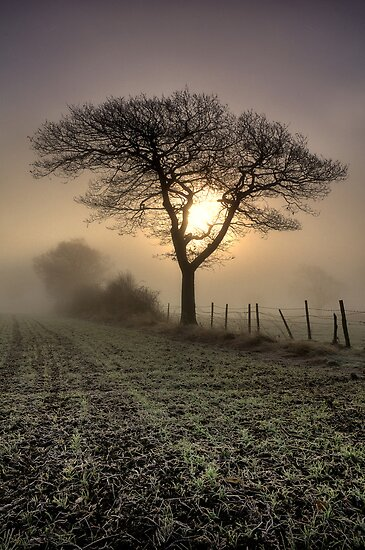 Tree by Chris Charlesworth