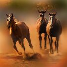 Three Horses by socalgirl