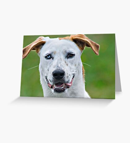 Two Toned Greeting Card