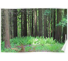 Fern And Trees Composition Poster