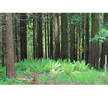 Fern And Trees Composition Photographic Print