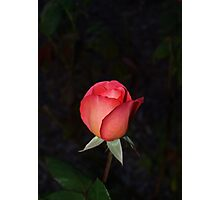 Precious and peachy Photographic Print