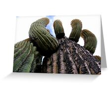 Sonoran Scenery Series ~ 1 Greeting Card