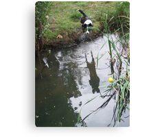 Zorro water jump Canvas Print