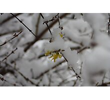 A Touch Of Yellow In The Snow- 09 Photographic Print
