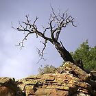 Gnarly Tree by Jimlhanson