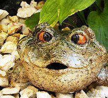 Frog in Garden by Jimlhanson