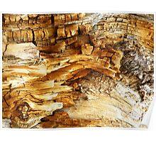 Decaying Log Poster