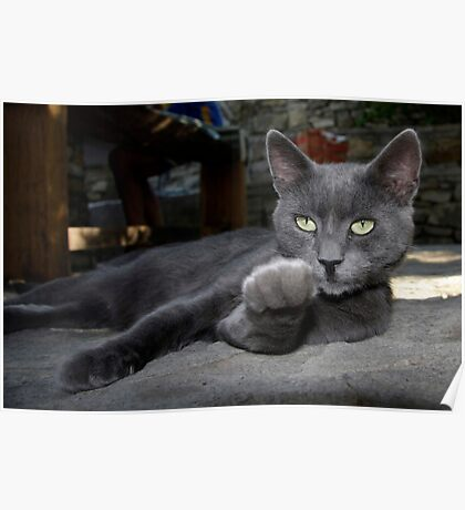 cat call Poster