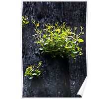 New growth in Toolangi Poster