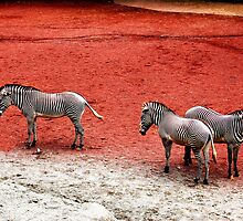Zebras on Red Earth by WaterGardens