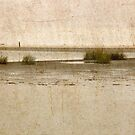 Low Tide by Tibby Steedly