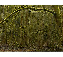 Forest of Narnia? Photographic Print