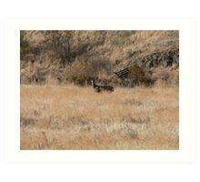 Mule Deer in Open Field Art Print