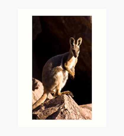 Yellow footed Rock Wallaby   Art Print