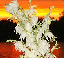 Yucca Bloom by barnsis