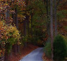 A touch of Fall by Judi Taylor