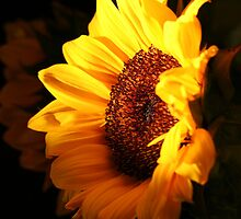 ~Here Comes the Sun~ by Terri~Lynn Bealle