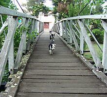 Pups on bridge by BackTrack