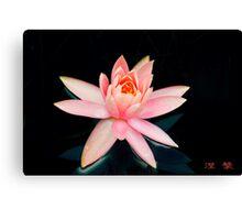 Pink Water Lily  - Sydney Royal Botanic Gardens, NSW Canvas Print