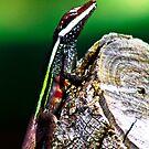 Lizard by Sheldon Pettit