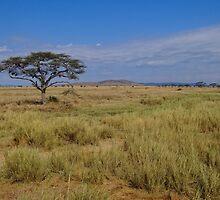 an amazing Tanzania landscape by beautifulscenes