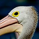 Portrait Of A Pelican by Bryan Freeman