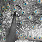 Unblinking Eyes by CinB