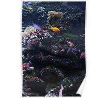 Undersea Garden Poster