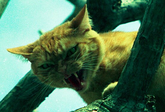 oi cranky cat by Juilee  Pryor