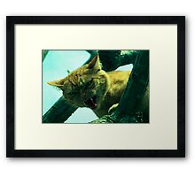 oi cranky cat Framed Print