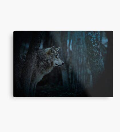 Night Visitor 3 - Psuedo Night Shot PS3 Metal Print
