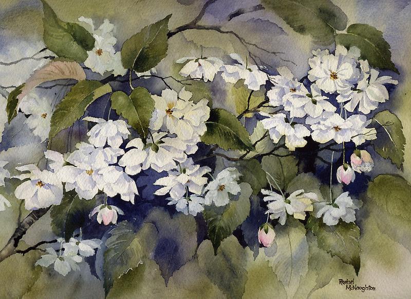 White Blossom by artbyrachel